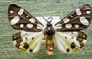 entomologiki-syllogi